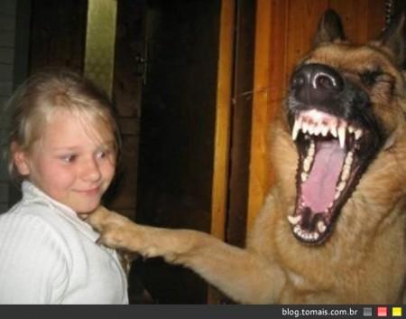 Cachorros não choram;