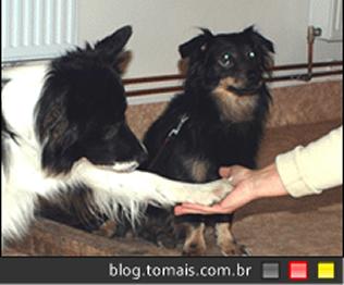 Cachorros te perdoam por brincar com outro cachoro