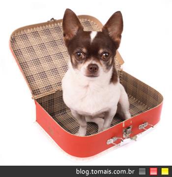 Os pais do seu cão não vem lhe visitar