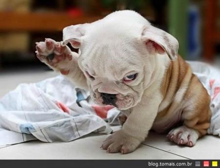 Cães concordam que você tem que levantar a voz para conseguir o que quer deles
